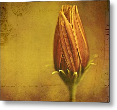 Floral Art Metal Print featuring the photograph Recollection by Bonnie Bruno