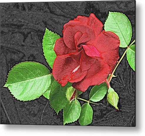 Rose Metal Print featuring the photograph Red Rose For My Lady by Michael Peychich