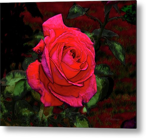 Red Metal Print featuring the photograph Red Rose by Joe Halinar