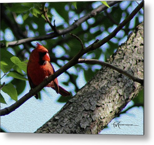 Wildlife Outdoor Images Metal Print featuring the photograph Red's Ray Of Light by Felipe Gomez