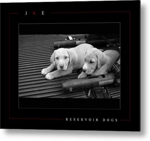 Dog Metal Print featuring the photograph Reservoir Dogs by Jonathan Ellis Keys