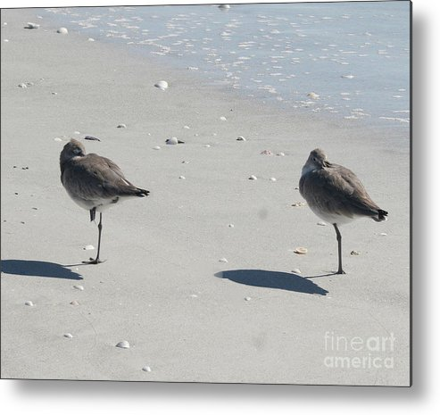 Sanibel Metal Print featuring the photograph Sanibel's Gulls by The Art of Alice Terrill