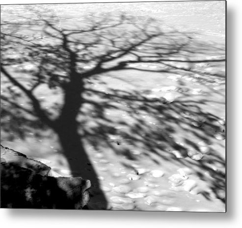 Shadow Metal Print featuring the photograph Shadow Tree Herrick Lake Naperville Illinois by Michael Bessler