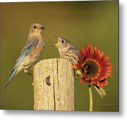 Nature Metal Print featuring the photograph Sheesh Doesn't This Kid Ever Stop by Gerry Sibell