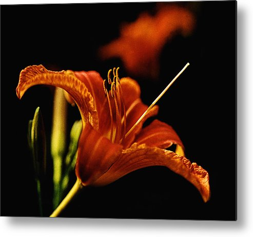 Garden Metal Print featuring the photograph Single Tiger Lily by Roger Soule