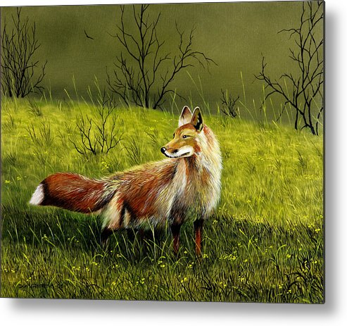 Wildlife Metal Print featuring the painting Sly Fox by Don Griffiths