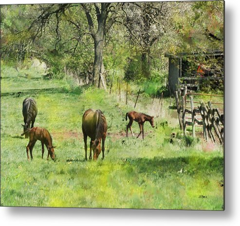 Spring Colts Metal Print featuring the digital art Spring Colts by John Beck