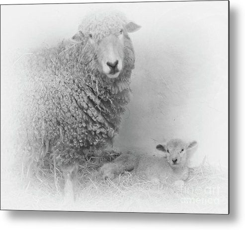 Lamb Metal Print featuring the mixed media Spring Has Sprung by Linsey Williams