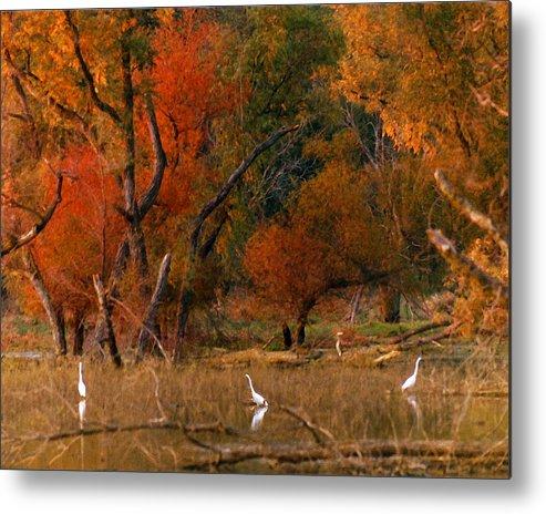 Landscape Metal Print featuring the photograph Squaw Creek Egrets by Steve Karol