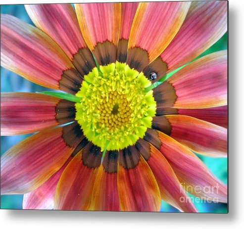 Photography Metal Print featuring the photograph Sunburst by Heather S Huston