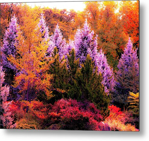 Sureal Forest Metal Print featuring the photograph Sureal Forest by Bryan Bailey