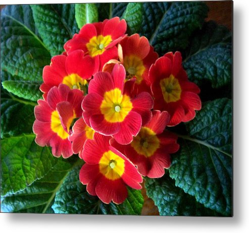 Flower Metal Print featuring the photograph The Bang by Rose Guay