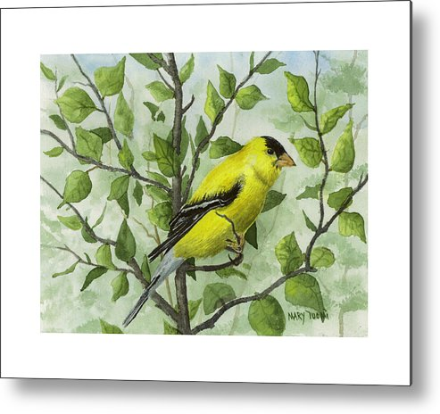 Birds Metal Print featuring the painting The Goldfinch by Mary Tuomi