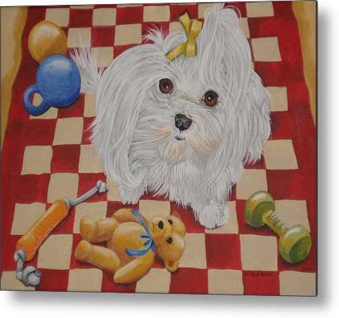 Maltese Playing Metal Print featuring the painting These Are My Toys by Laura Bolle