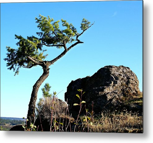 Nature Metal Print featuring the photograph Tree And Rock by Ben Upham III