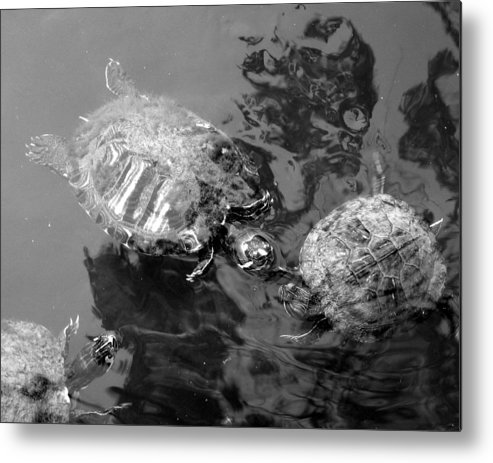 Turtles Metal Print featuring the photograph Turtle Pond by Lindsey Orlando