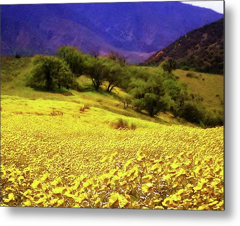 Wildflowers Metal Print featuring the photograph Wildflowers In The San Emigdio Mountains by Timothy Bulone