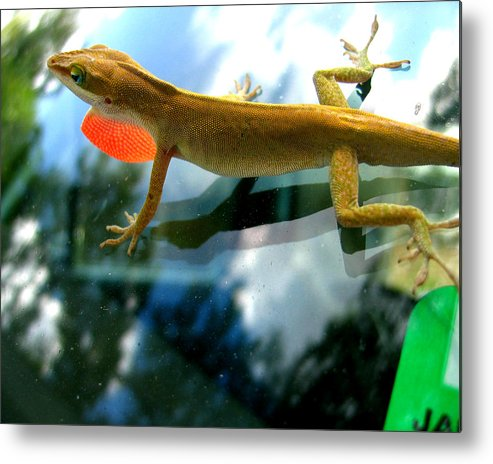 Lizard Metal Print featuring the photograph Windshield Walker by Lindsey Orlando