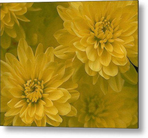 Yellow Mum Art Metal Print featuring the photograph Yellow Mums by Linda Sannuti