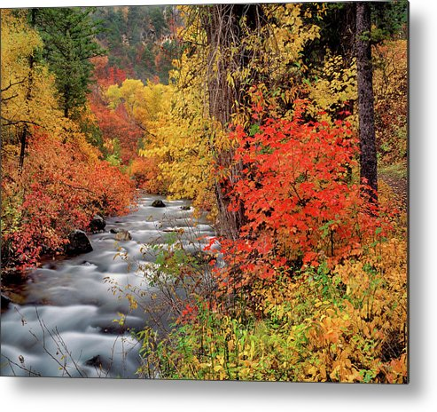 Idaho Scenics Metal Print featuring the photograph Autumn Rapids by Leland D Howard