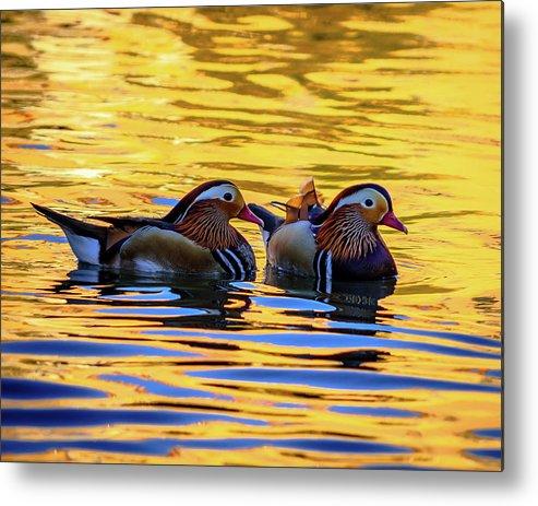 Mandarin Metal Print featuring the photograph Mandarin Ducks by Borja Robles