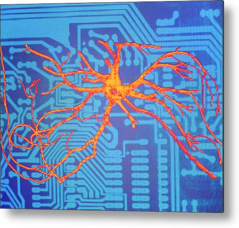Neural Networks Metal Print featuring the photograph Neural Network: Artwork Of Nerve Cell On Chip 2 by Mehau Kulyk/science Photo Library