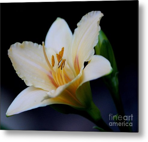 Flowers Metal Print featuring the photograph Day Lily by Irina Hays