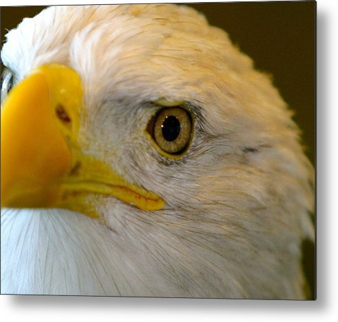 Eagle Metal Print featuring the photograph Eagle 6 by Reno Massimino