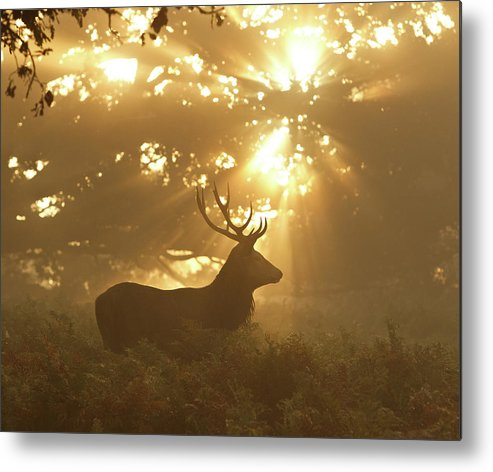 Nature Metal Print featuring the photograph Ghost Of The Forest by Greg Morgan