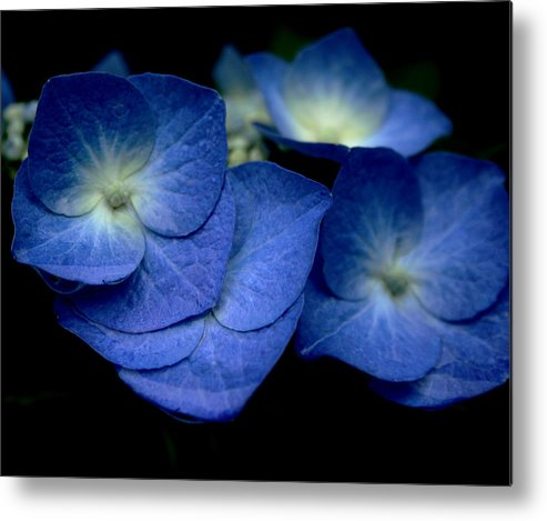 Blue Metal Print featuring the photograph Tangled Up In Blue by Stephen Melcher