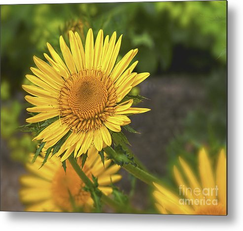 Olympus Metal Print featuring the photograph The Yellow One by Darren Wilkes