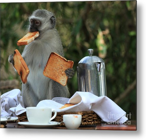 Humor Metal Print featuring the photograph Toast Monkey by Leigh Lofgren