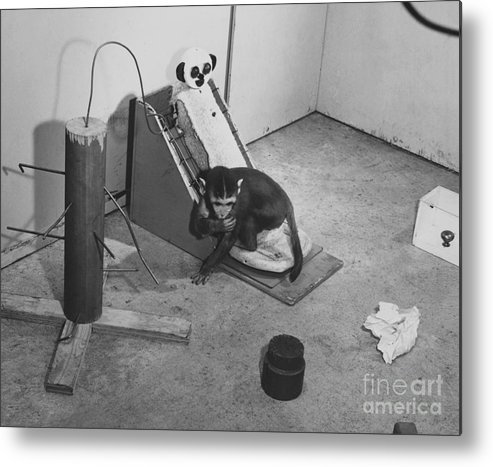 Psychology Metal Print featuring the photograph Harlow Monkey Experiment by Science Source