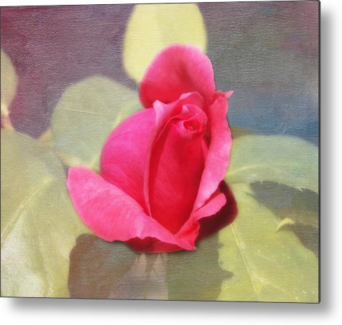 Florals Metal Print featuring the photograph Rainbow Rose by Linda Dunn