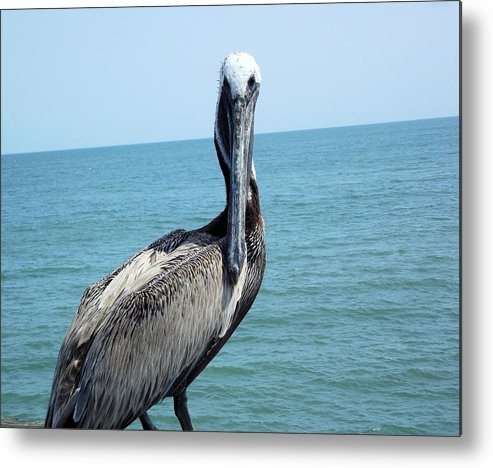 Pelican Metal Print featuring the photograph You Lookin At Me by Jennifer Stockman