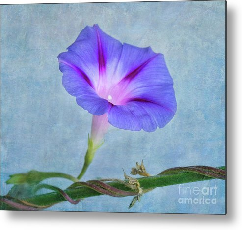Flower Metal Print featuring the photograph Delicate by Claudia Kuhn