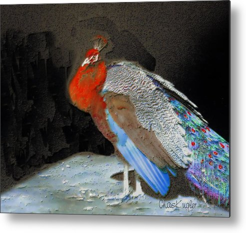 Bird Metal Print featuring the painting Peacock II by Chuck Kugler