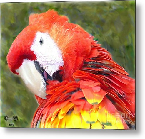 Bird Metal Print featuring the photograph Parrot by Terry Burgess