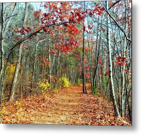 Horn Pond Metal Print featuring the photograph A Walk In The Woods by Jane Merrit