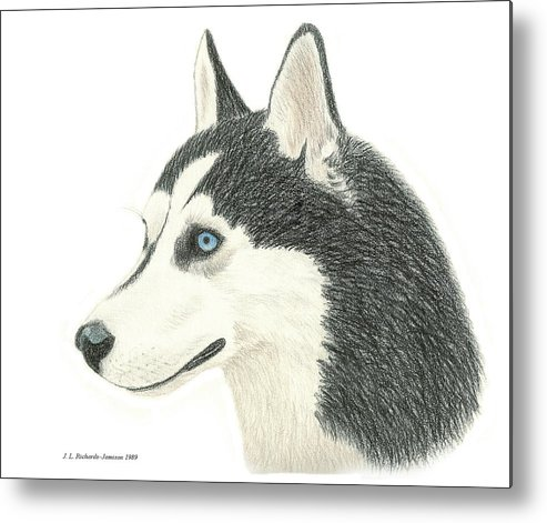Siberian Husky Metal Print featuring the drawing Apollo by Jennie Richards