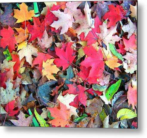 Fall Metal Print featuring the photograph Autumn Leaves by Mitch Cat
