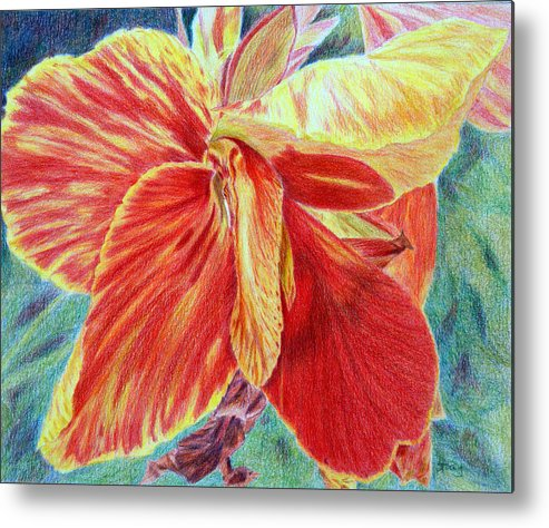 Canna Lily Metal Print featuring the drawing Canna Lily by Tina Storey