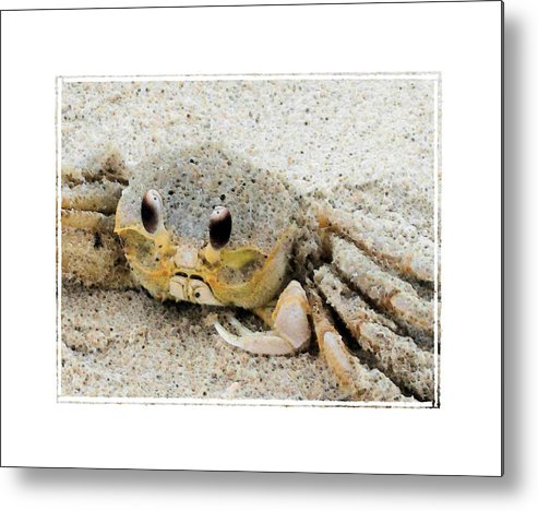 Crab Metal Print featuring the photograph Crusty by Robert Boyette