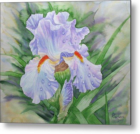 Flowers Metal Print featuring the painting Dew On Light Blue Iris. by Natalia Piacheva