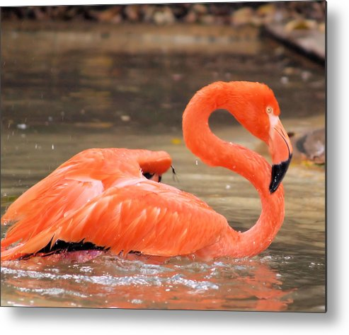 Flamingo Metal Print featuring the photograph Flamingo by Gaby Swanson