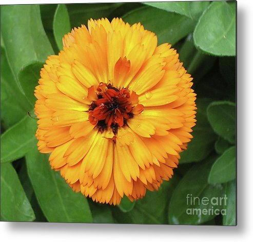 Flower Metal Print featuring the photograph Gold Flower by Dean Triolo