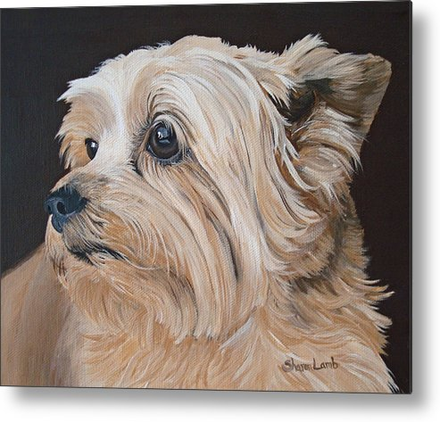 Pet Portrait Painting Dog Cairn Terrier Cats Horses Labs Sheperds Metal Print featuring the painting Pet Portrait Painting Commission Cairn Terrier by Sharon Lamb