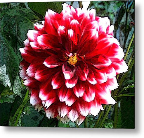 Flower Art Metal Print featuring the painting Red And White Dahlia by Norma Boeckler