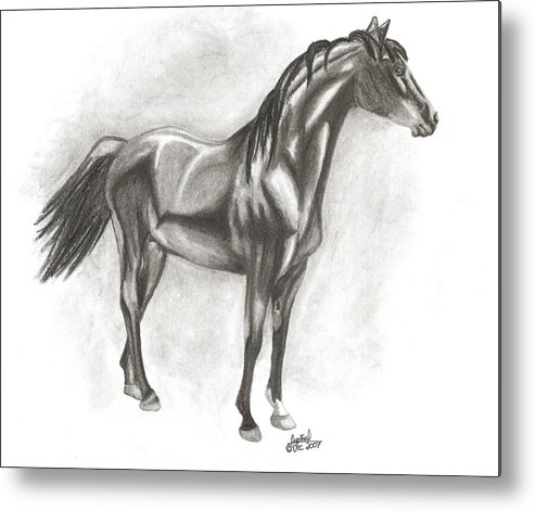 Zimmy Portrait Horse Metal Print featuring the drawing Zimmy by Crystal Suppes