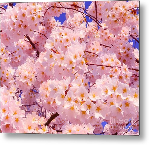 2012 Centennial Celebration Metal Print featuring the photograph Bursting With Blossoms by Jeff at JSJ Photography